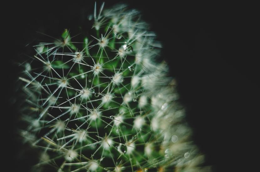 Foto en detalle de una Mammillaria