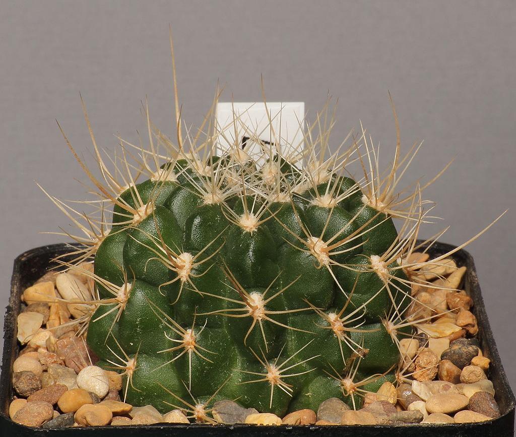 e2d0aafe8 Cómo saber si mi cactus se está pudriendo?