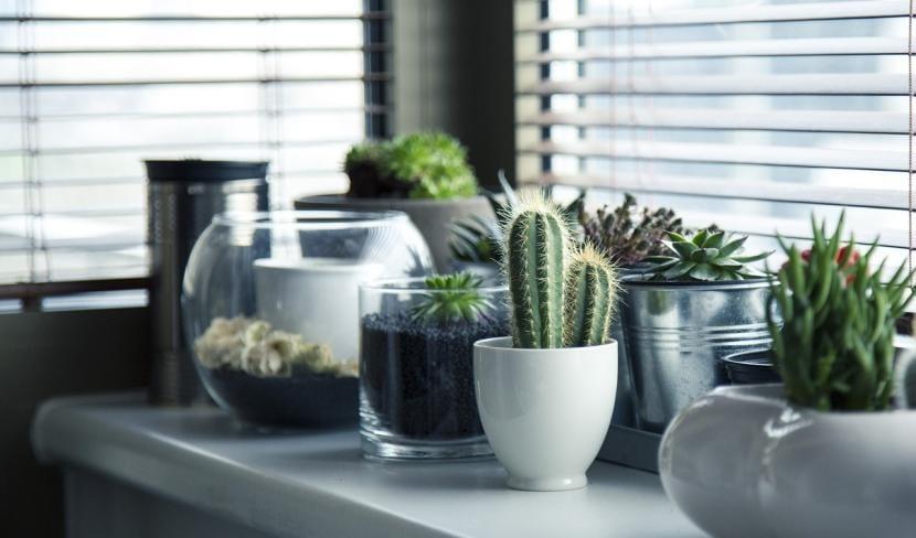 Plantas suculentas dentro del hogar