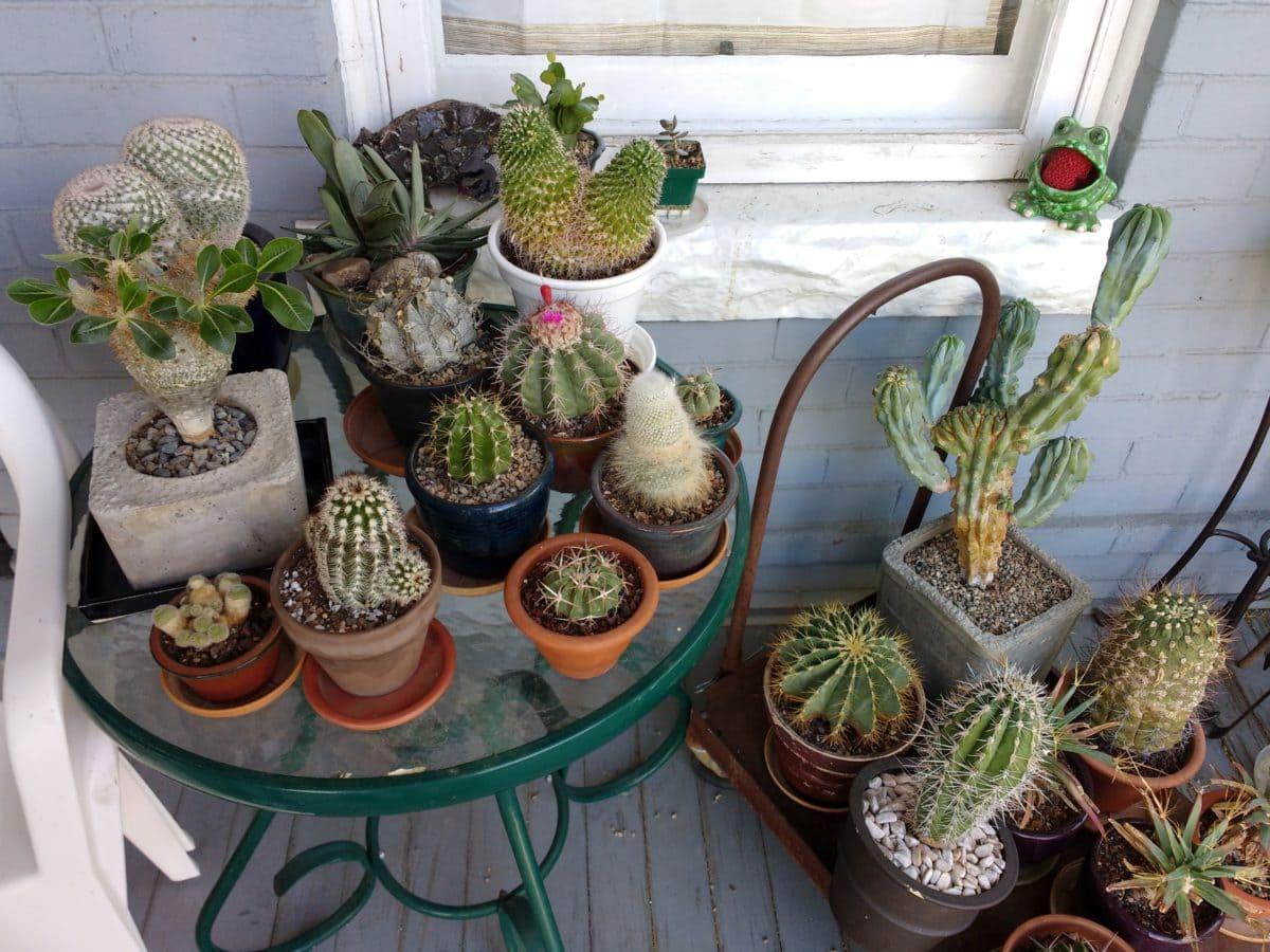 Las macetas de los cactus han de tener agujeros de desagüe